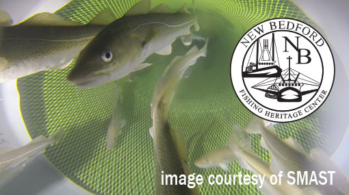 Dock-u-mentaries: Finding And Avoiding Fish